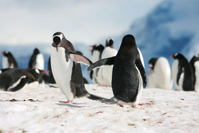 Viene Penguin 3.0